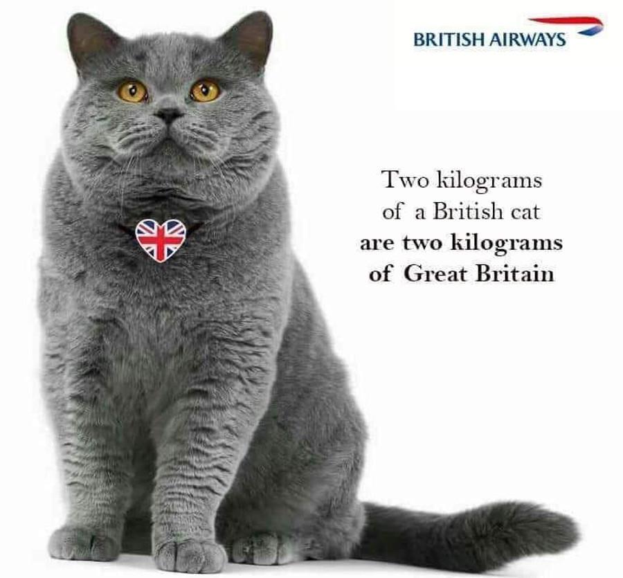 »Dva kilograma britanske mačke sta dva kilograma Velike Britanije. – British Airways«