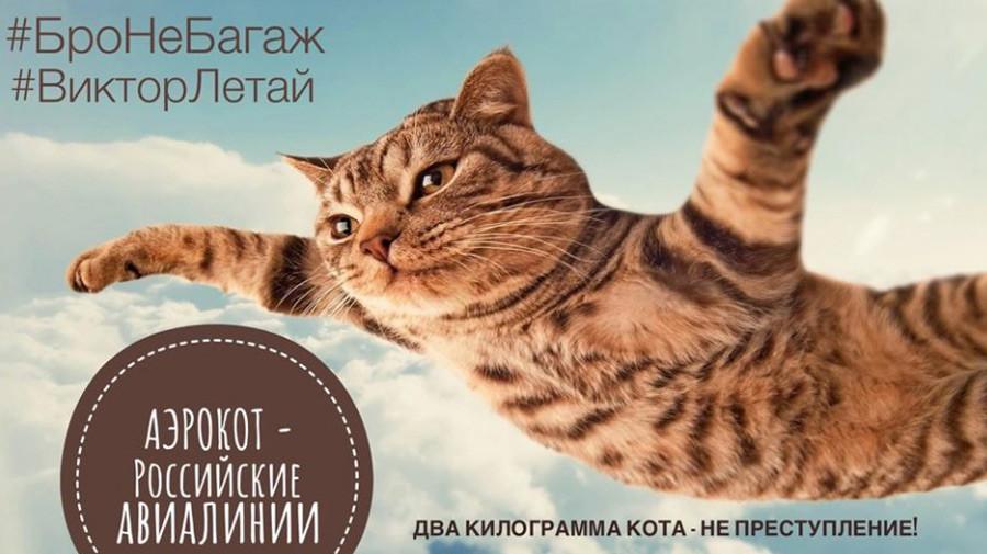 »#Prijateljniprtljaga #LetiViktor Dva kilograma mačke nista zločin. – Aeroflot, ruski letalski prevoznik«  the_cat_maffin  https://www.instagram.com/the_cat_maffin/