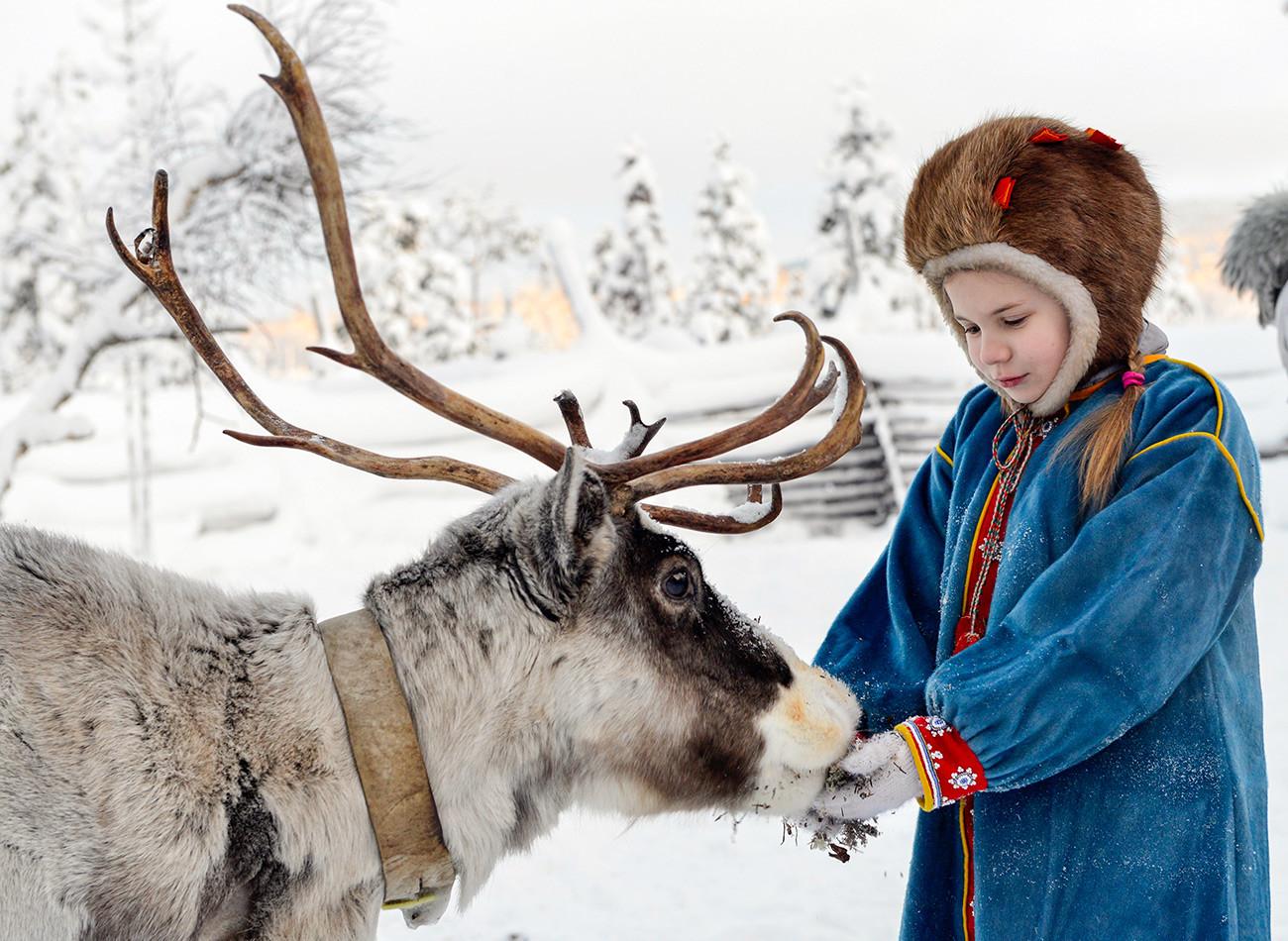 Une fillette nourrit un renne lors de la Journée internationale des Samis dans une communauté voisine appelée
