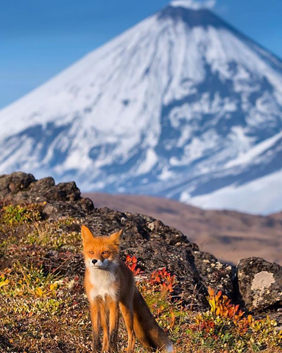 Denis est reconnu comme l'un des meilleurs photographes au monde par de nombreux concours nationaux et internationaux, tels que ceux du Wildlife photographer of the year de la BBC et de la GDT, Montphoto, HIPA, Best of Russia.