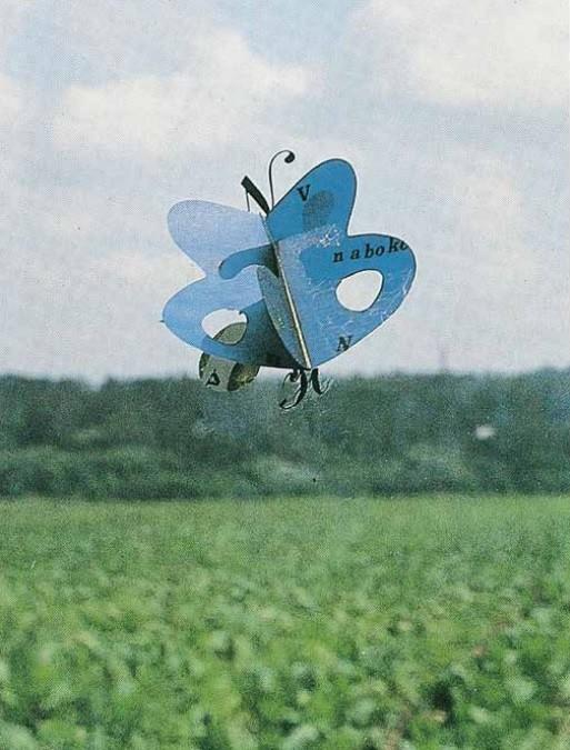 Бабочка Набокова (Бабочка Жаклин)