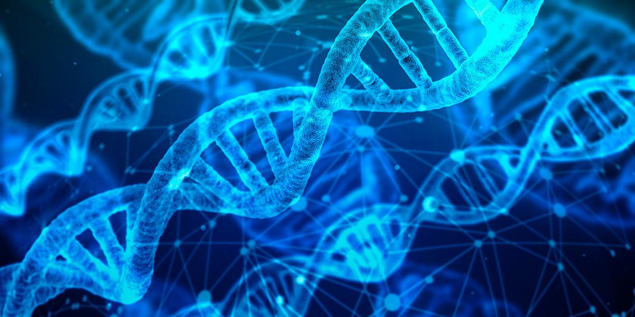 Молекул ДНК
