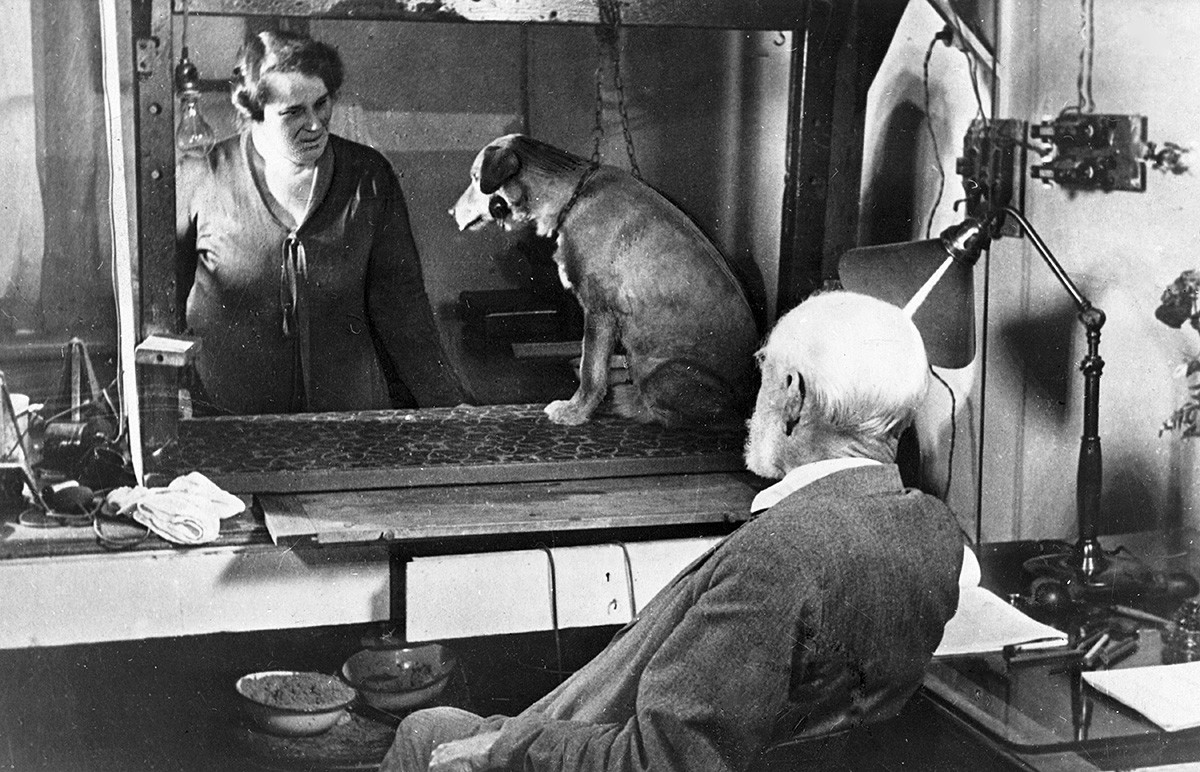 Ivan Pavlov watching an experiment with a dog, summer 1934