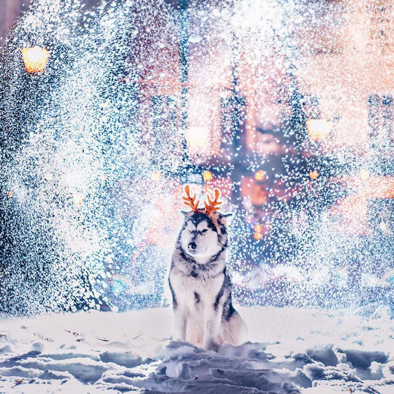 Божиќни саеми, блескави украси, лизгалишта, топли кафулиња: Москва е особено прекрасна во ова време.