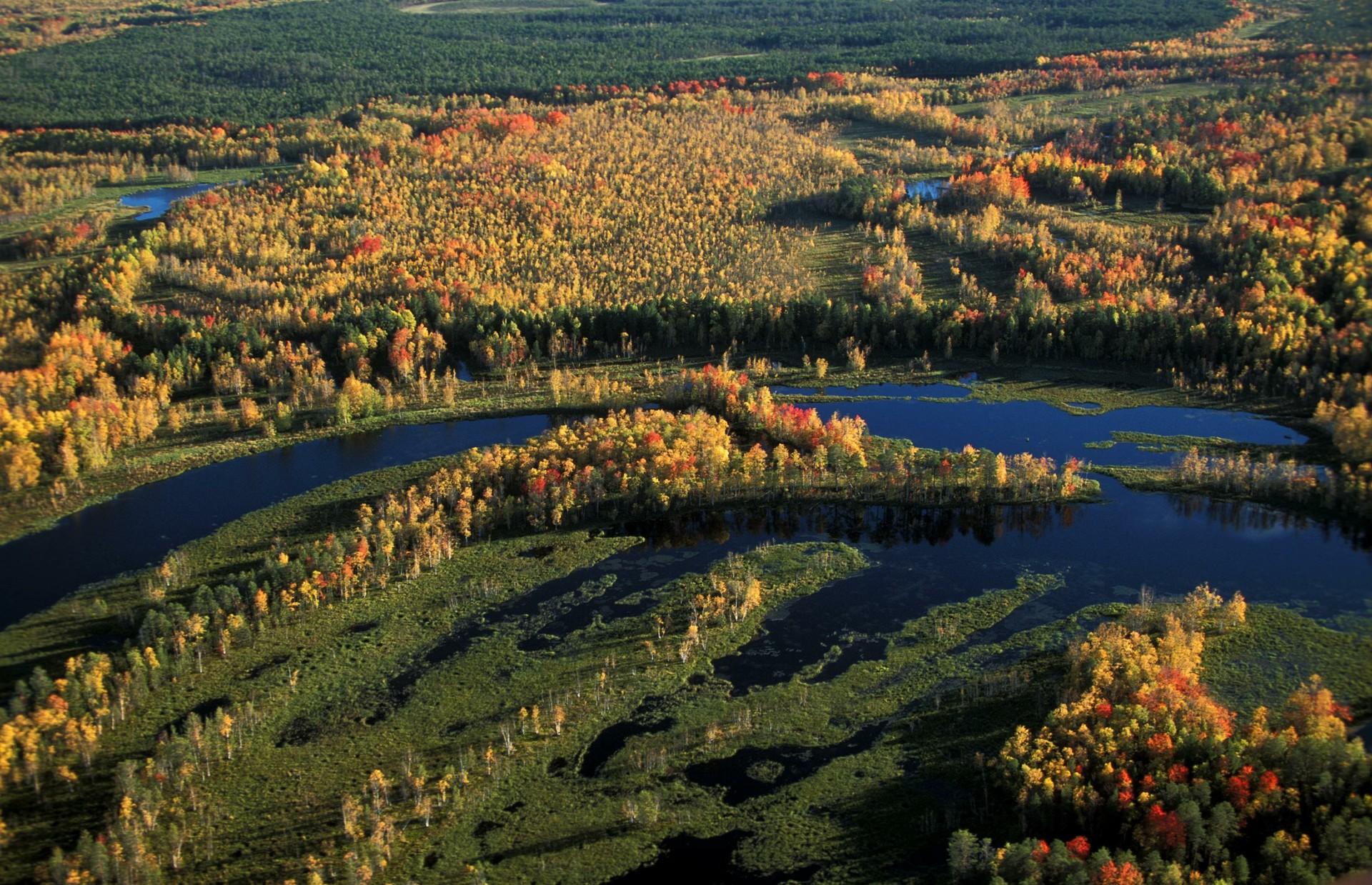 Pemandangan hutan di Tomsk pada musim gugur.