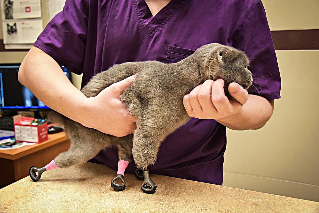 Dimka após a cirurgia.