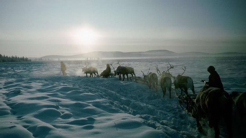 Оленеводы пересекают Тайгу на санях