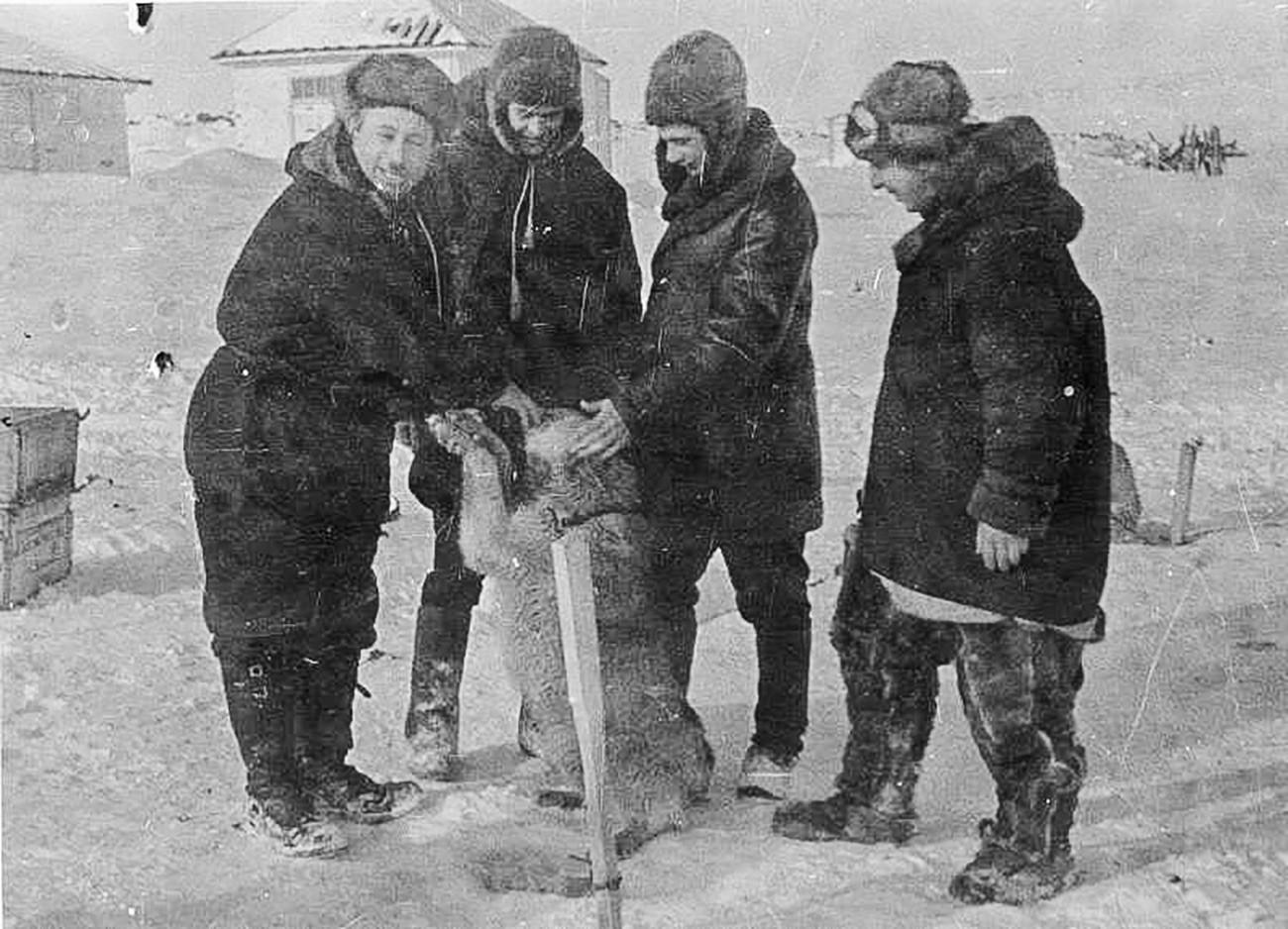 """Експедиција се искрцала на лед 21. маја 1937. Плутајућа станица """"Северни пол 1"""" званично је отворена 6. јуна 1937. Пети """"члан посаде"""" је била поларна лајка, пас по имену Весели."""