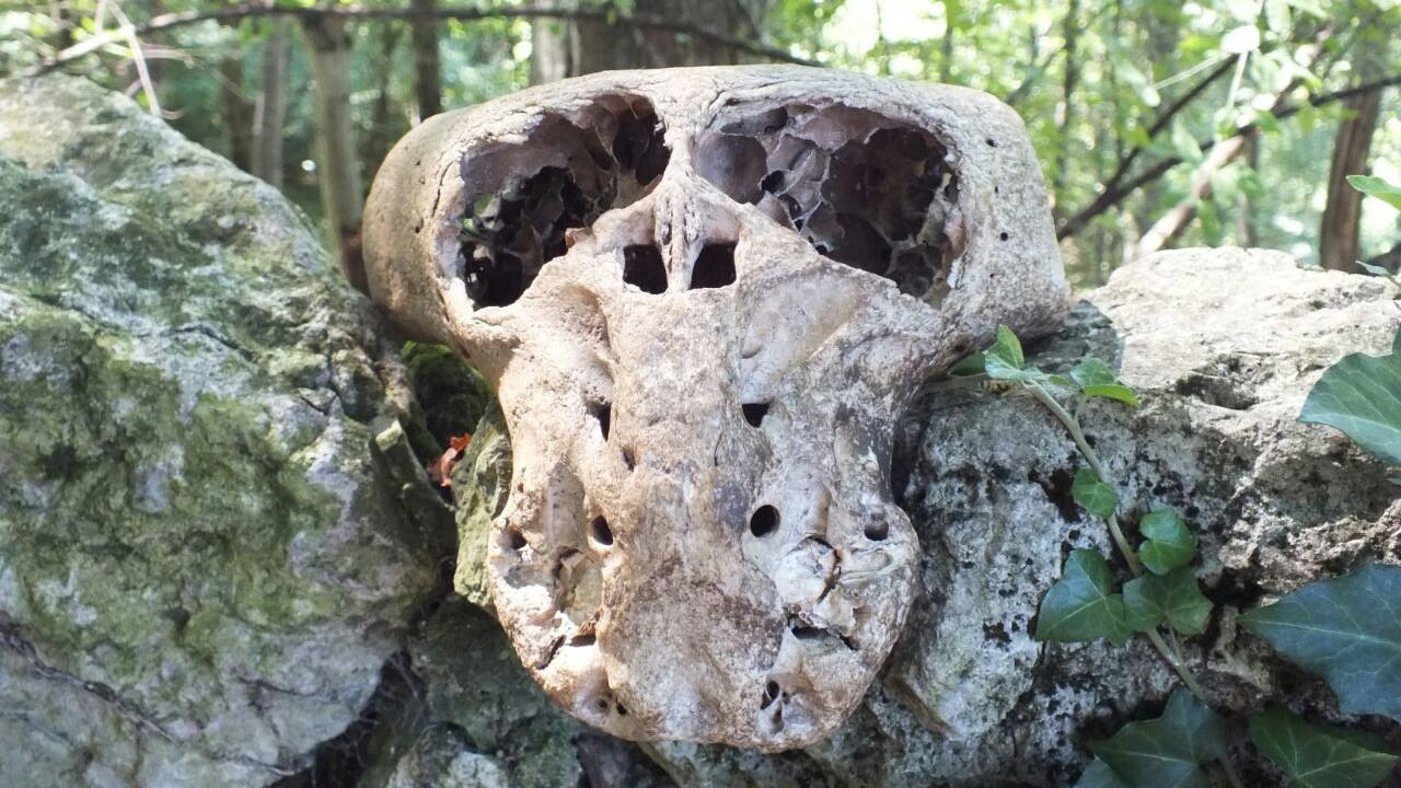 Фото черепа из чемодана.