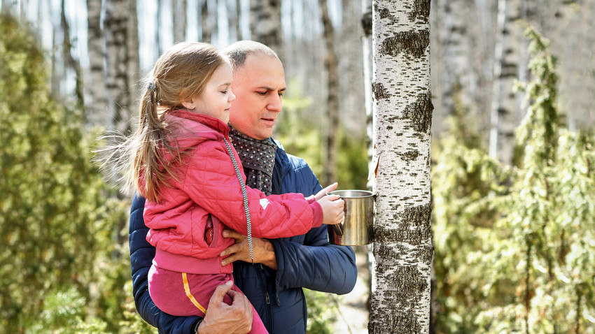 Zbiranje brezovega soka
