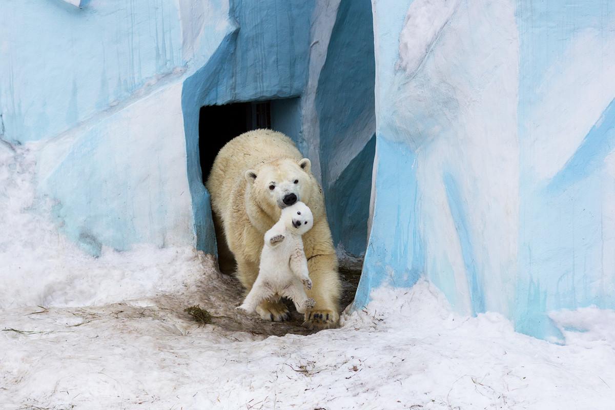 Novosibirsk Zoo.