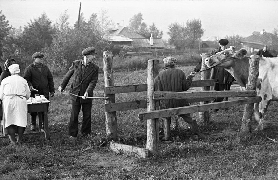 Vakcinacija protiv antraksa (crnog prišta), Novokuznjeck.