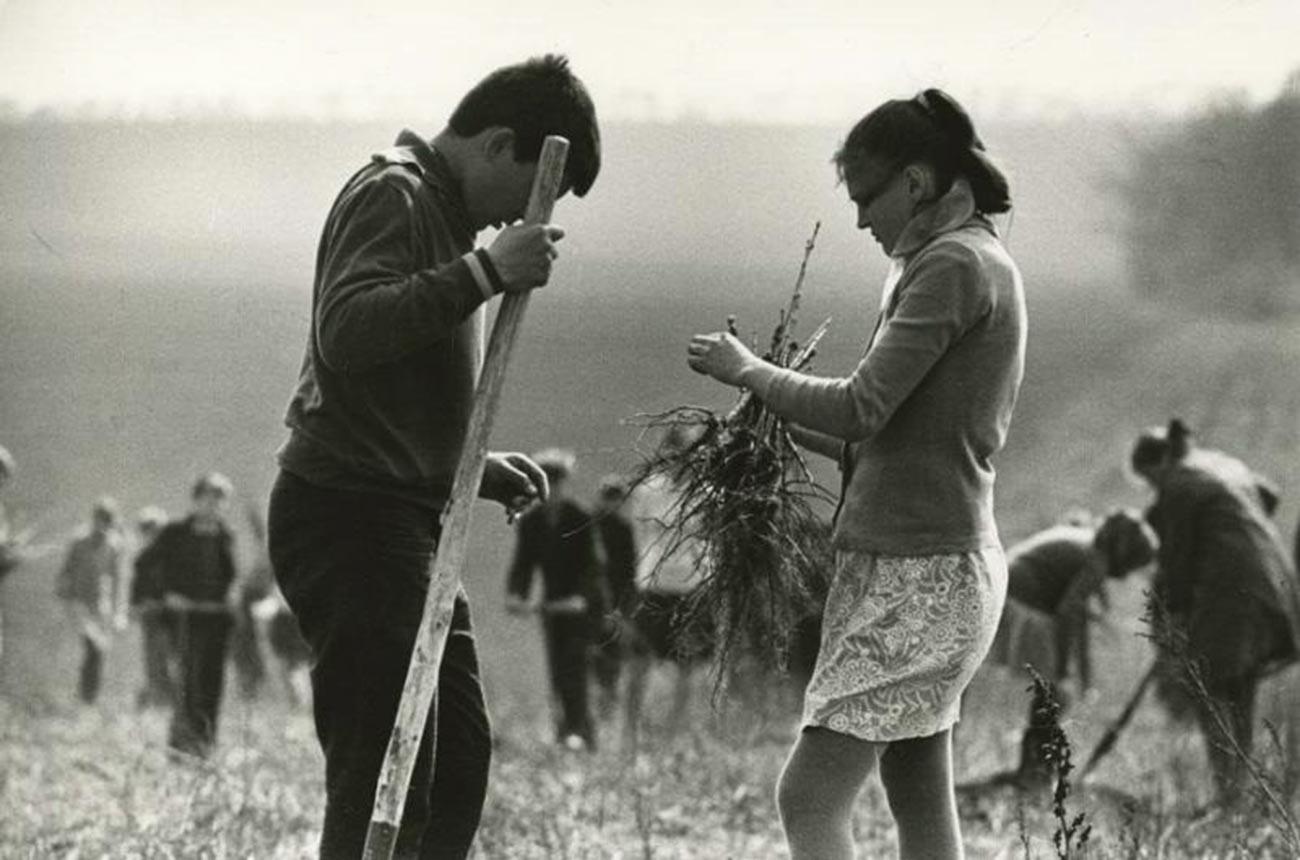 植樹する生徒たち、1972年