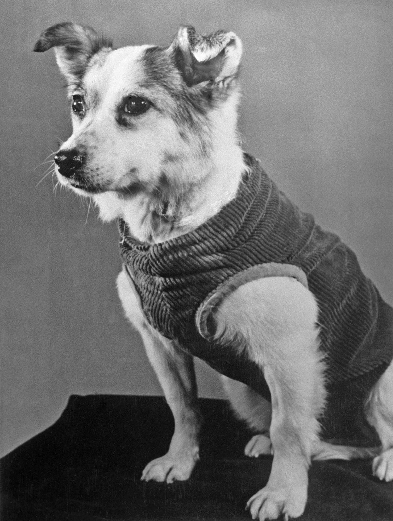 宇宙飛行を成し遂げ無事に地球に帰った犬のズヴョズドチカ