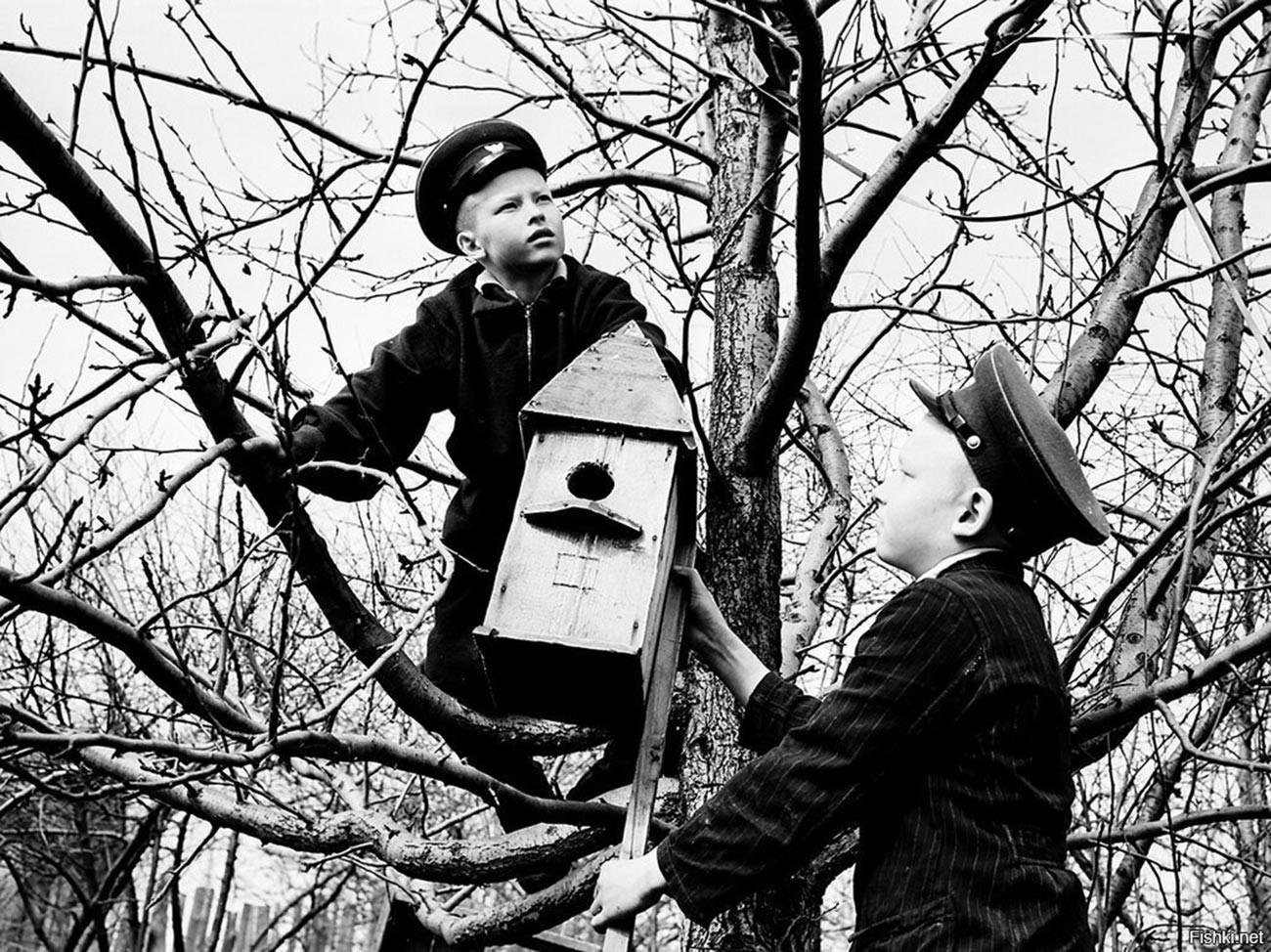 Estudiantes de una escuela montan casas para pájaros, 1959