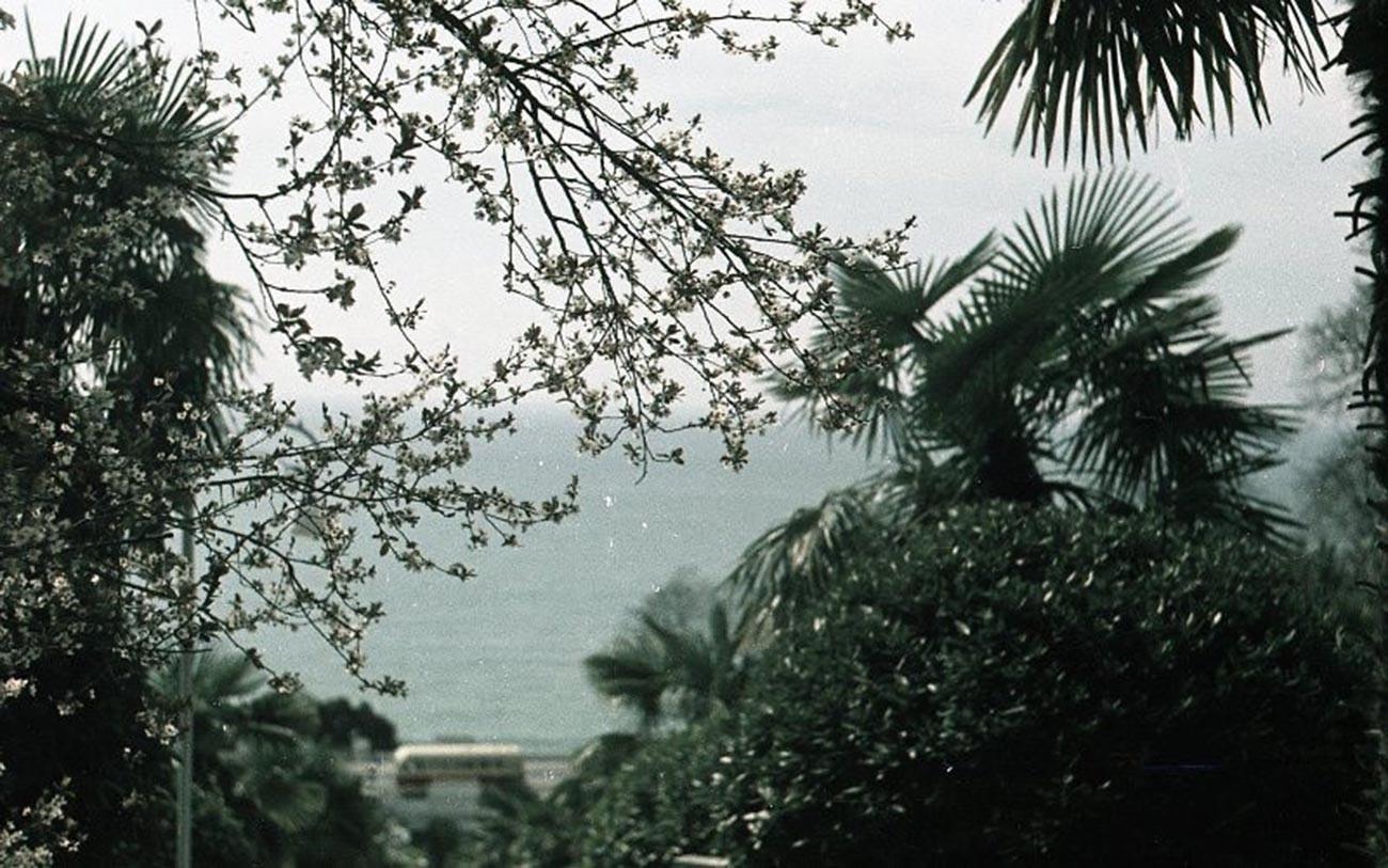 Primavera en la costa del mar Negro, 1950