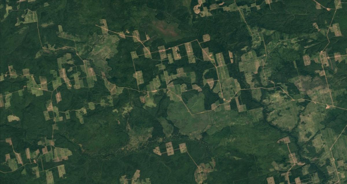 Fragment de la taïga russe, dans la région d'Irkoutsk. Des zones comme celles-ci font désormais partie intégrante du paysage sibérien.