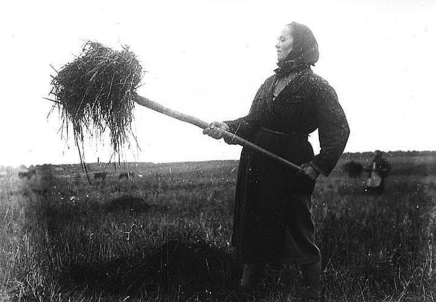 Seorang pekerja perempuan sedang memotong jerami.