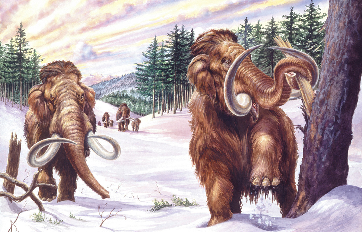 Some Russians believe that mammoths can still be found living in dense Siberian taiga.