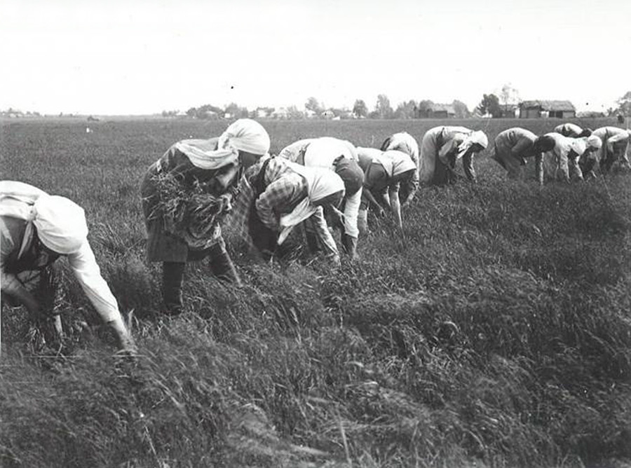 Peasants in Russia had to adapt to short summers with very limited time for agricultural work.