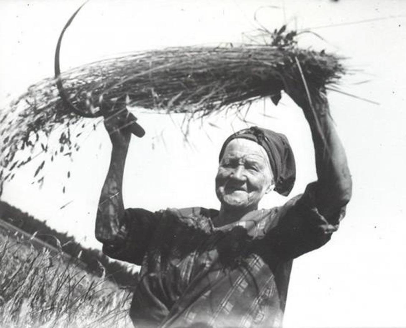Seorang perempuan tua mengangkat seikat gandum.