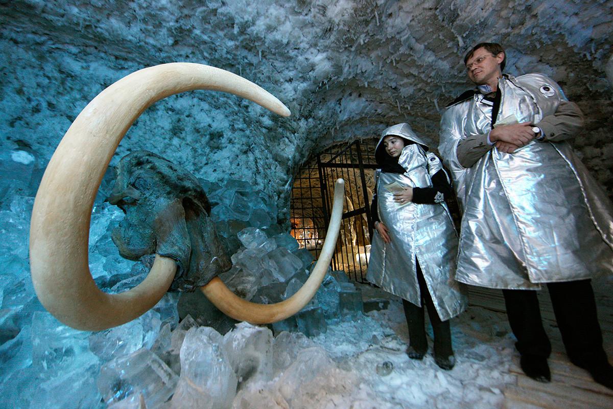 Il 75% dei resti di mammut ben conservati sono stati trovati in Yakutia