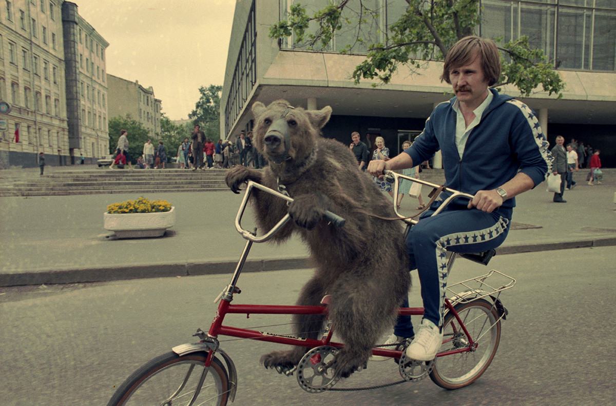 Oso en una bicicleta