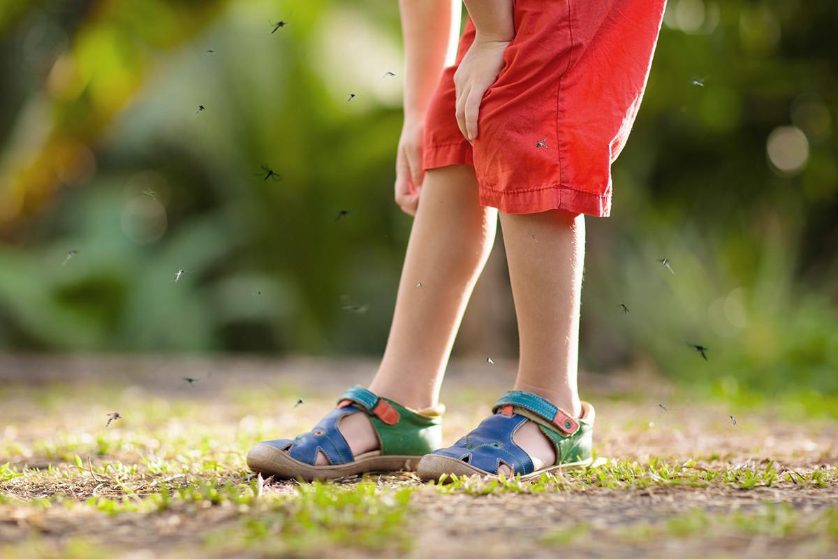 ¡Llévate un spray antimosquitos!