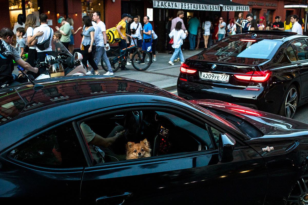 Pes, ki gleda skozi okno avtomobila, medtem ko ljudje uživajo v toplem vremenu ob Patriarhijskih ribnikih v Moskvi