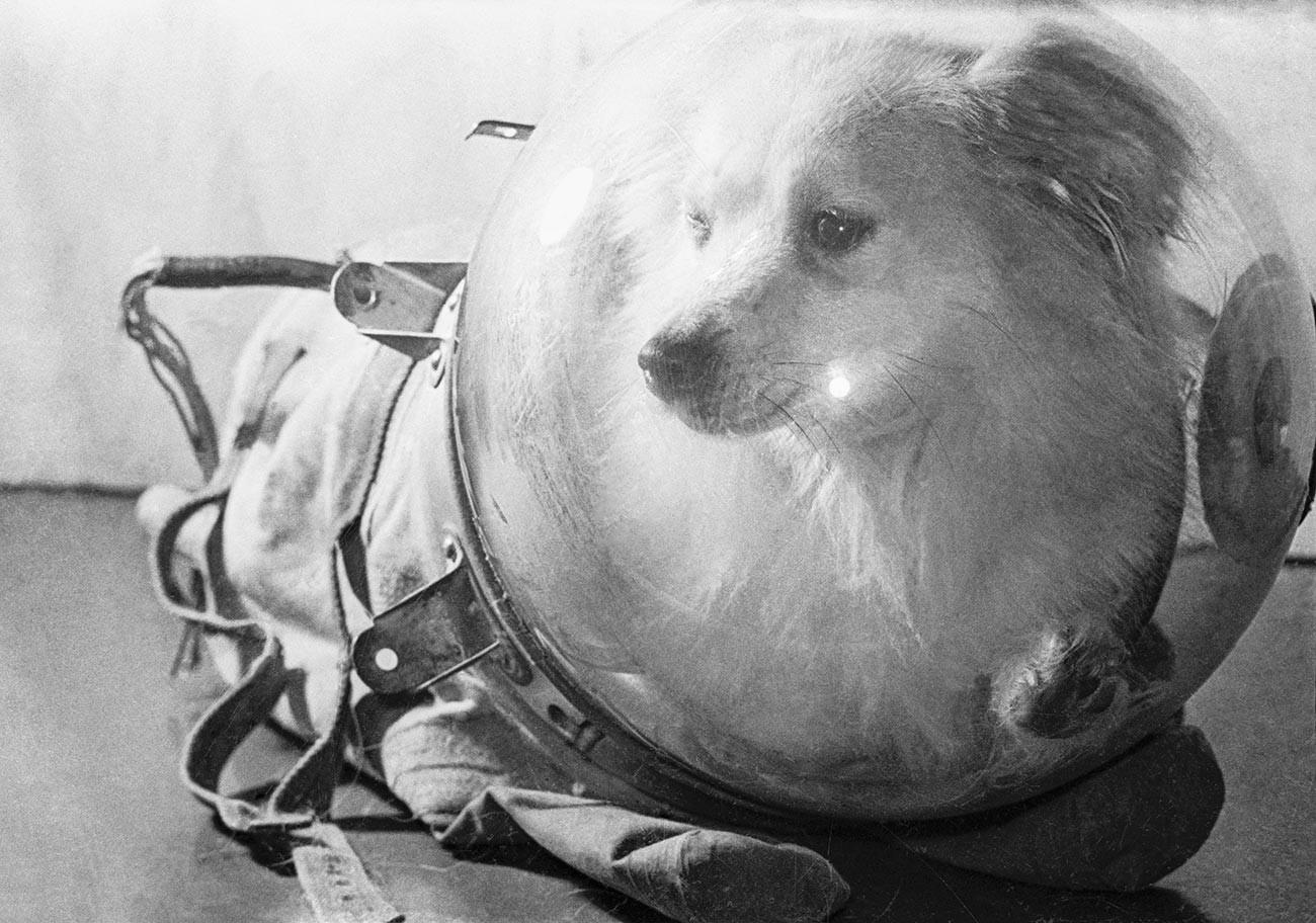 Пас у скафандеру