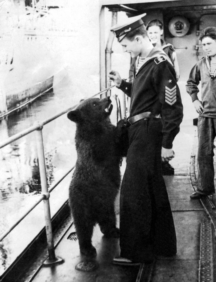 Космати млади морнар
