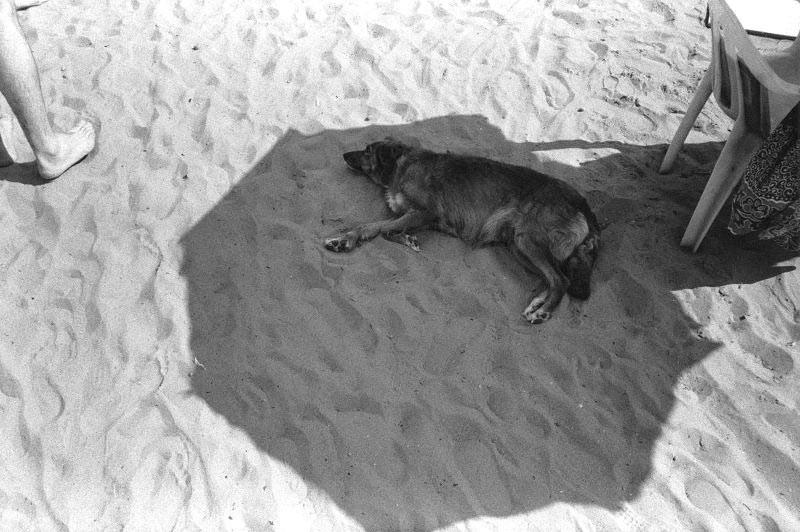 Un îlot d'ombre sous un soleil de plomb.