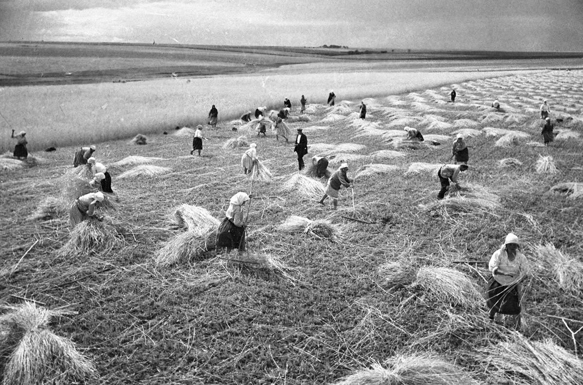 Panen di pertanian kolektif, wilayah Cherkasy, 1935.