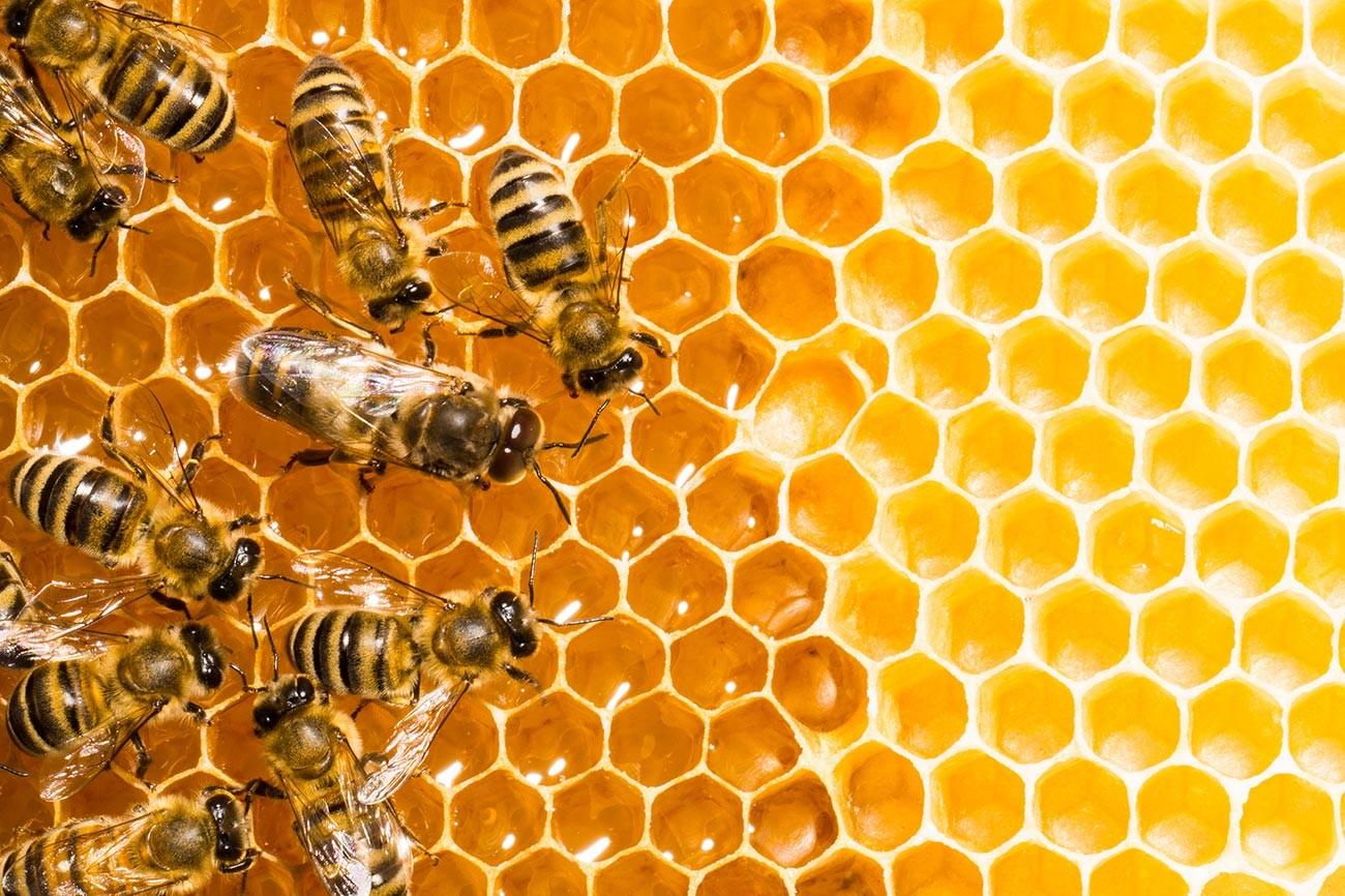 """""""Hidup itu lucu. Langit cerah. Lebah membuat madu. Siapa yang butuh uang?"""" (Alvin Lee dari Creedence Clearwater Revival)"""