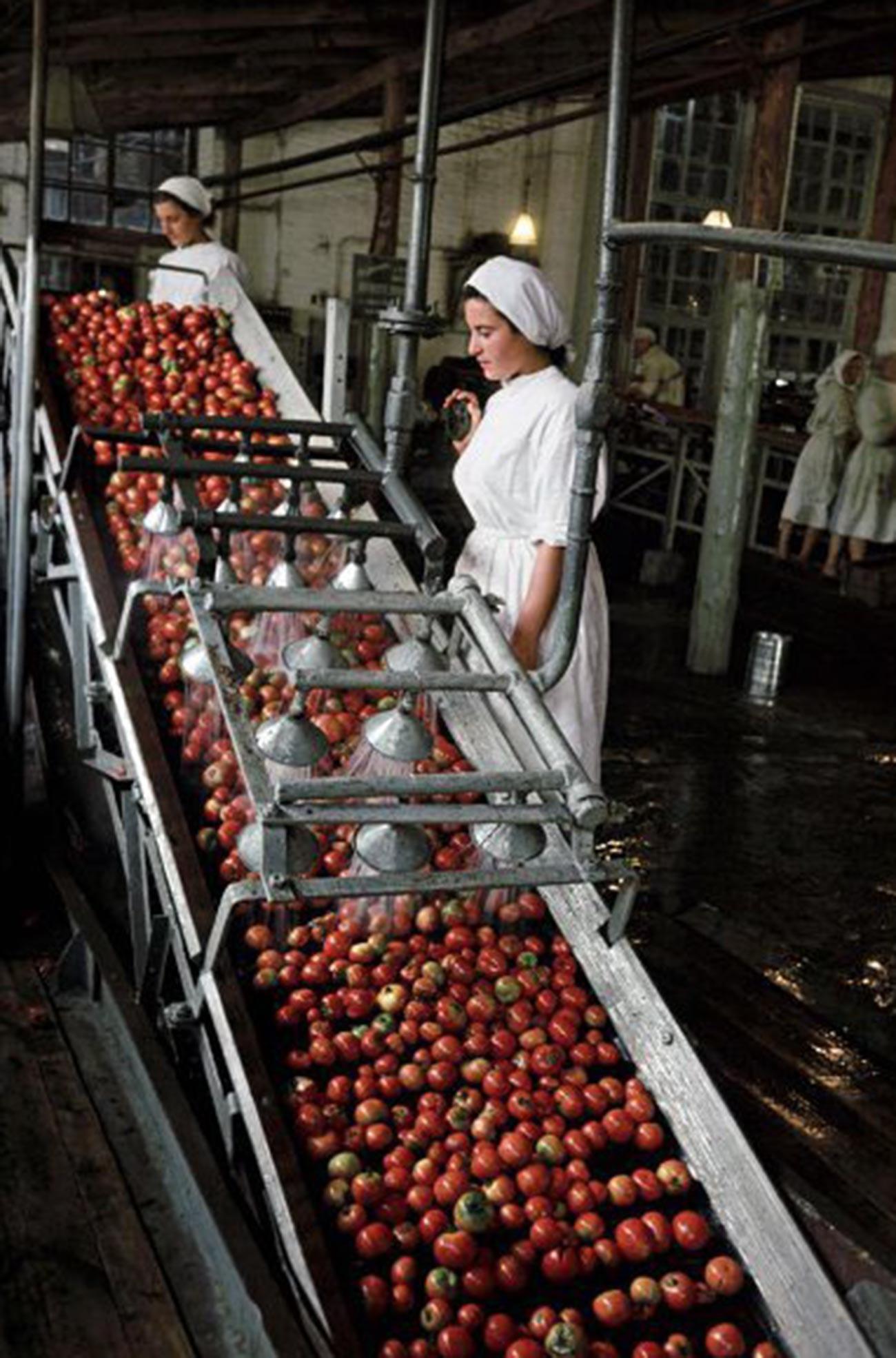 Suasana di pabrik pengalengan tomat Tiraspol, 1 Mei, 1953.