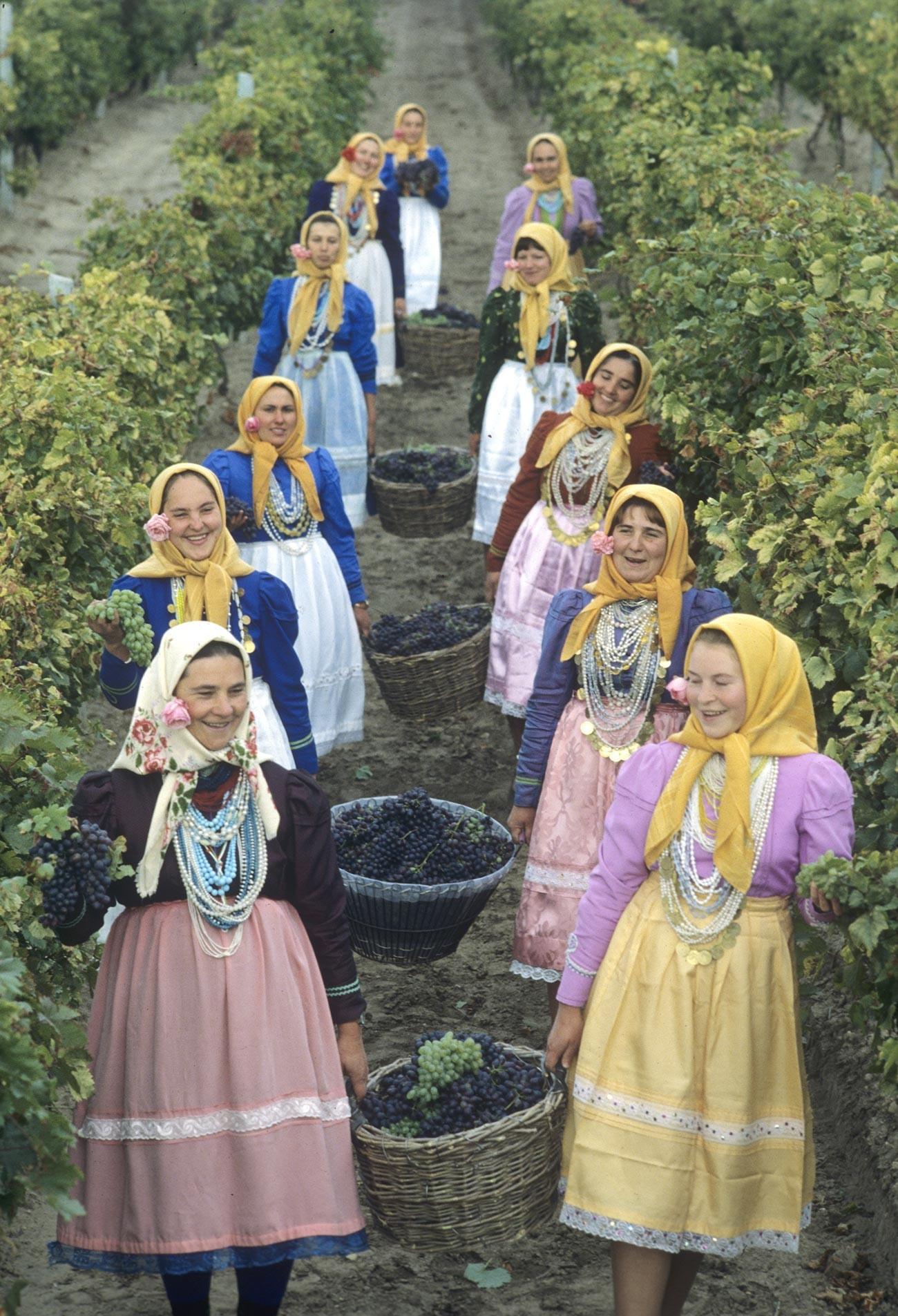 Colheita de uvas em vila na Moldávia, 1982