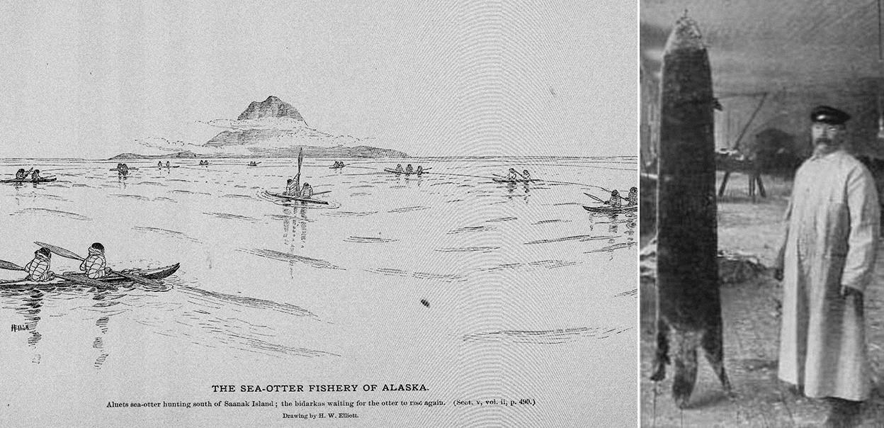 Sea-otter fishery of Alaska (L) and an Alaska black silver-tipped sea-otter (R)