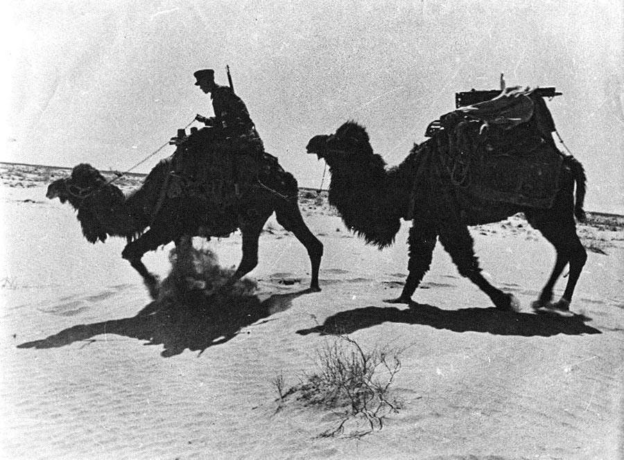 Auch Kamele wurden in der sowjetischen Armee eingesetzt. Ein Grenzschutzbeamter in Sowjet-Zentralasien