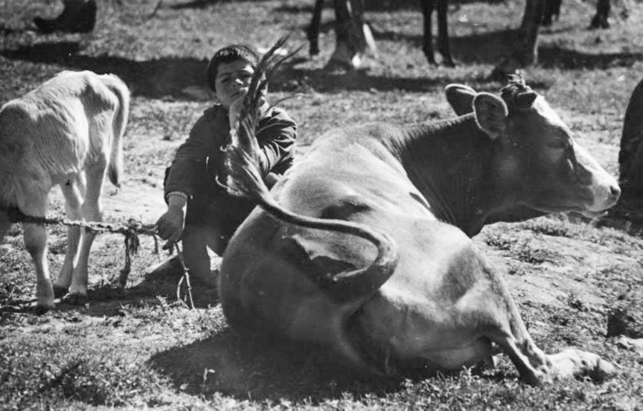 Un garçon arménien surveillant le bétail dans les années 1960