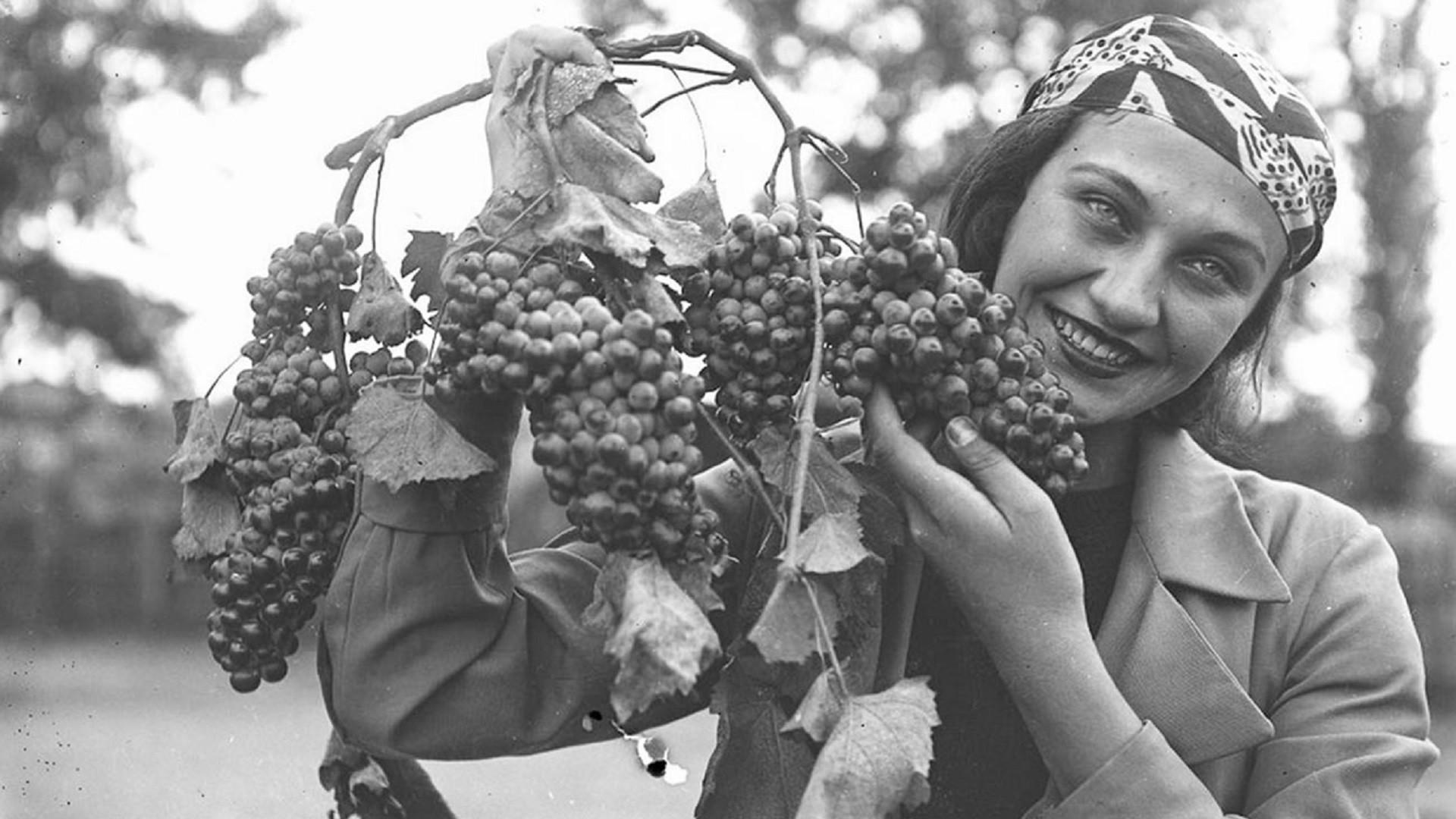 Une femme durant les vendanges en Géorgie, 1938