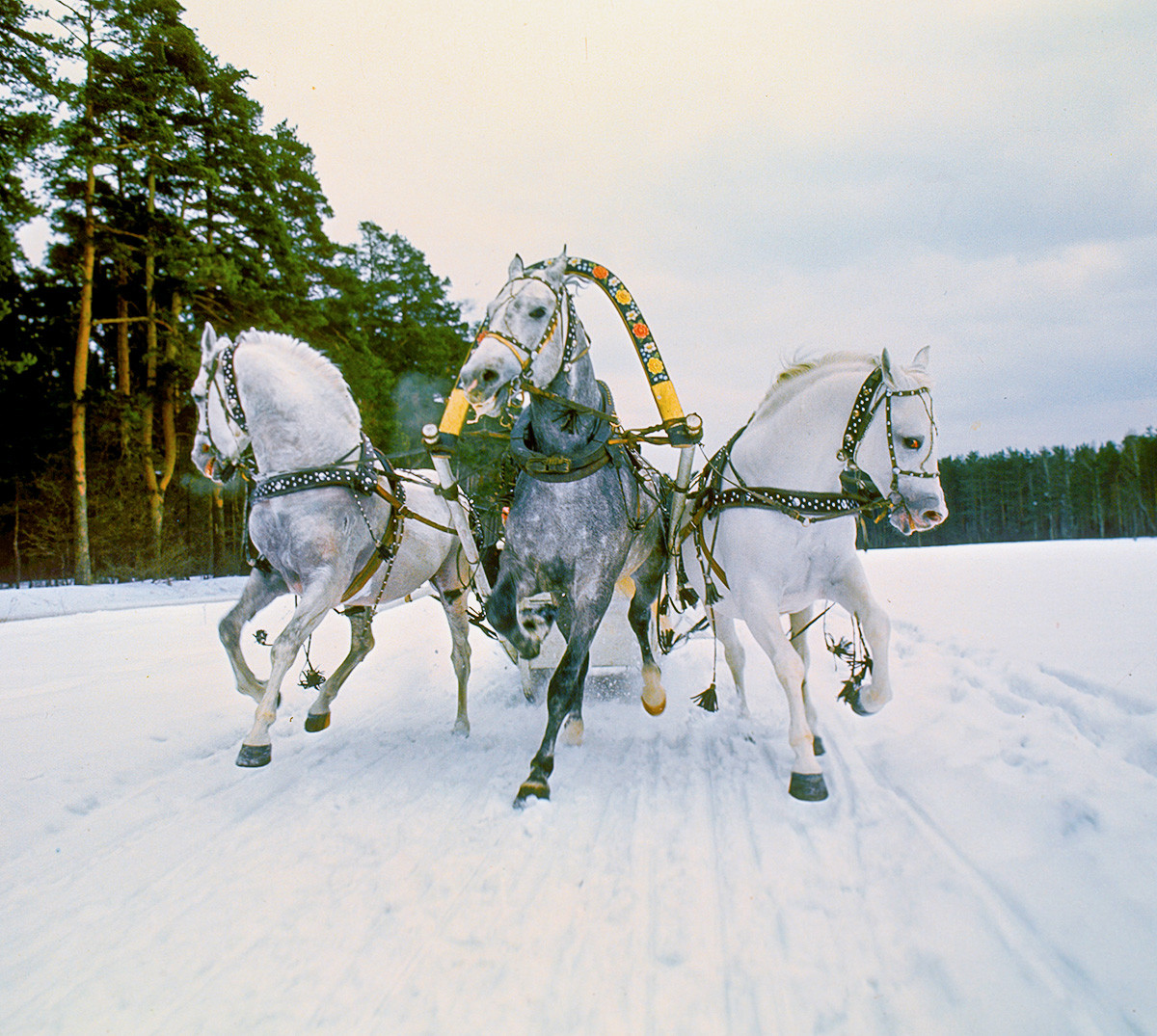 Sleighing on traditional Russian troika.