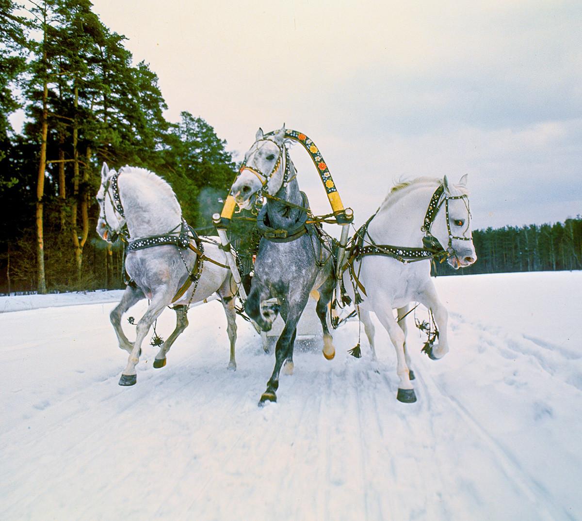 Viagem em troika russa tradicional.