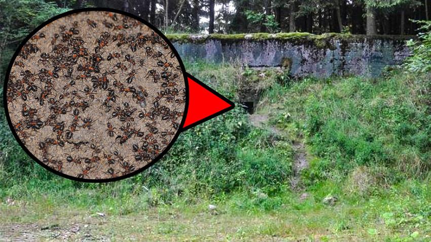 """Il bunker nucleare dove è stata trovata la """"colonia"""" di formiche, abbandonato dopo la caduta dell'Unione Sovietica"""