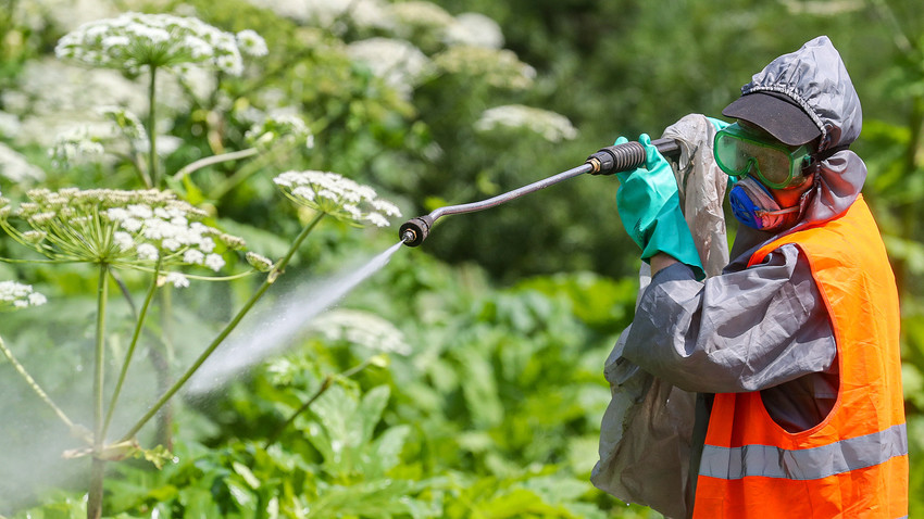 A person in a protective suit kills weed in Moscow Region.