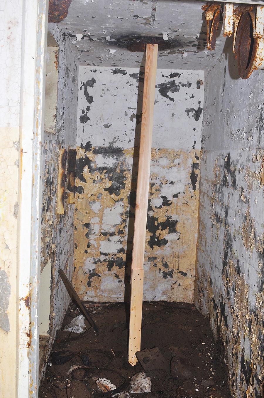 Madeira colocada para formigas retornaram à superfície