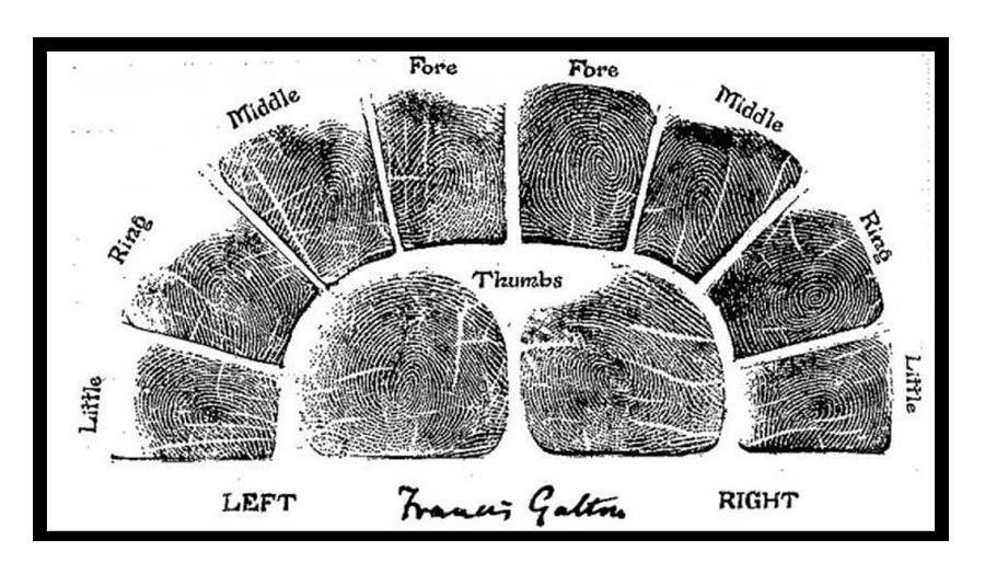 Образец для взятия отпечатков пальцев