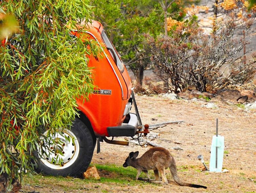 This is Boris and a kangaroo.