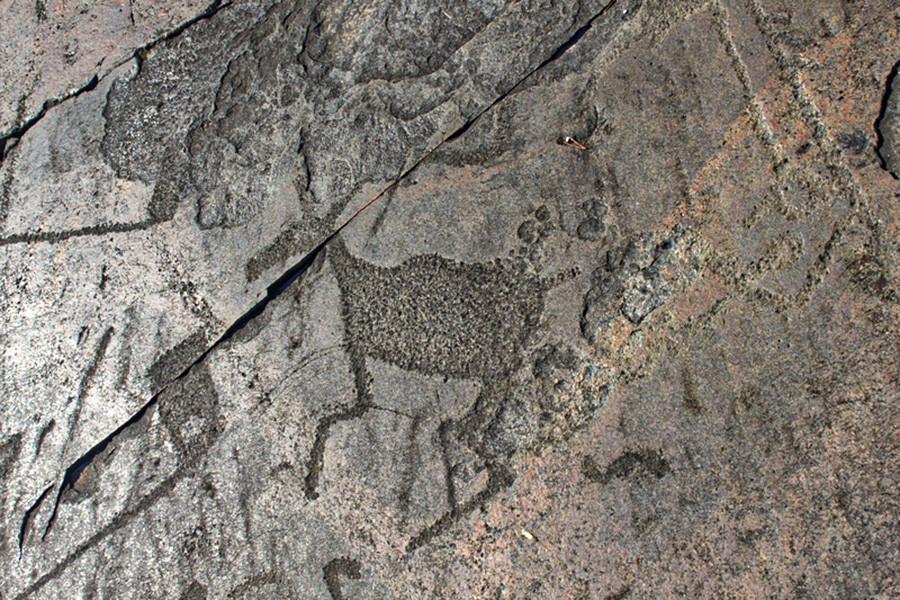 Цртежи на стени, петроглиф јелена у Оњешком језеру, Карелија, Русија.