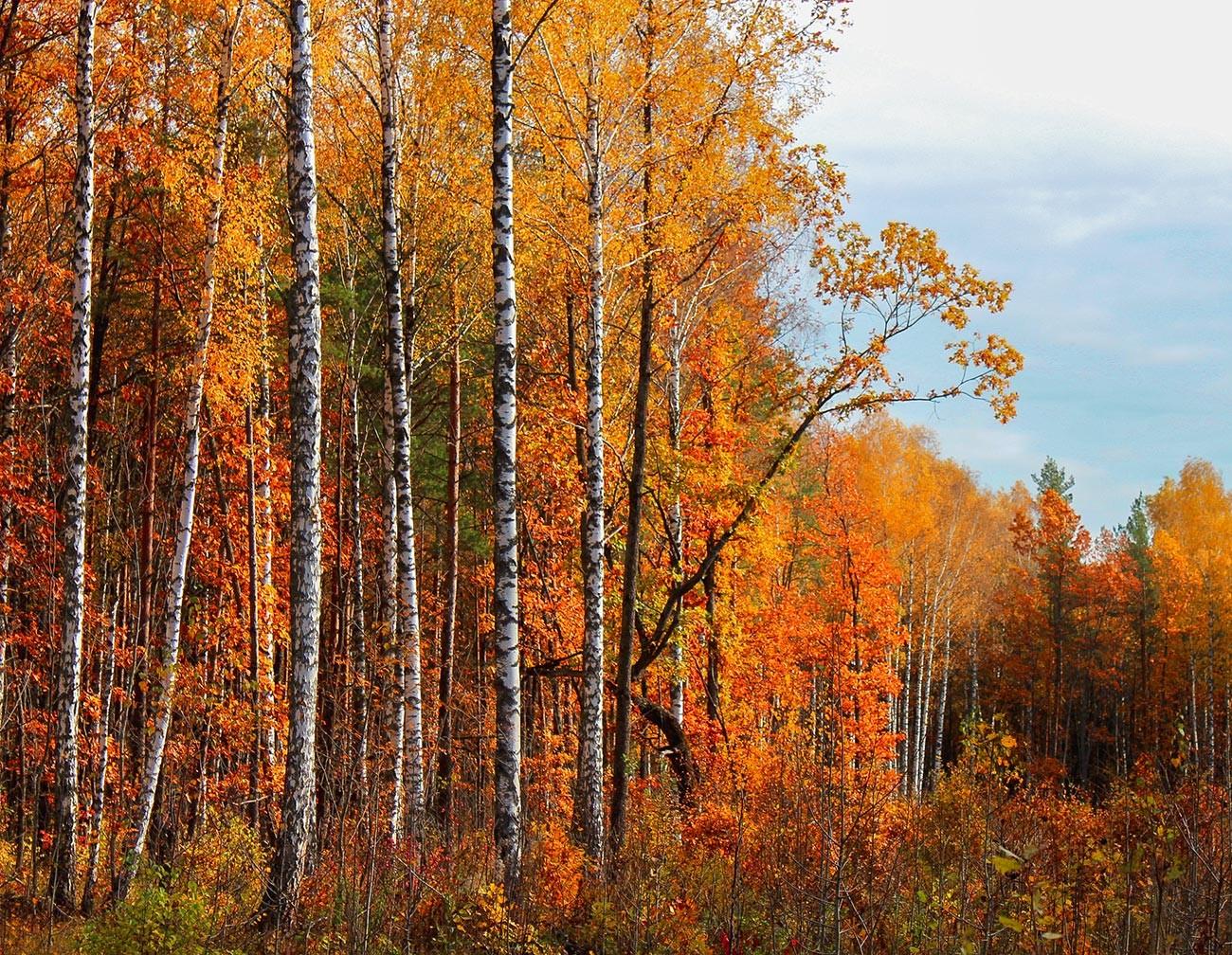ロシアの森の秋