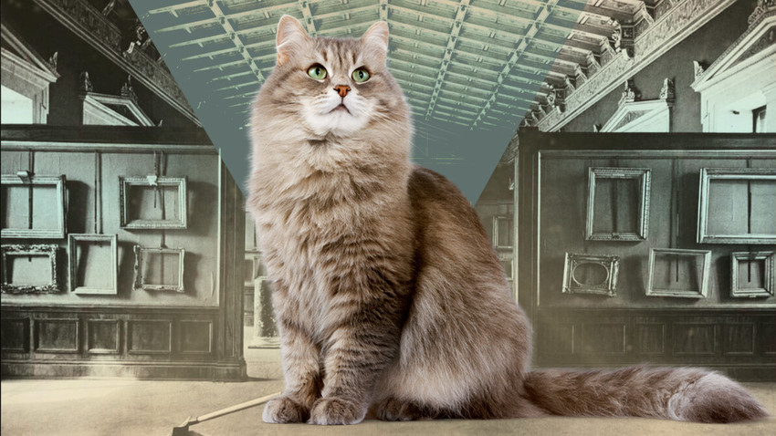 How Siberian Cats Saved The Hermitage Russia Beyond